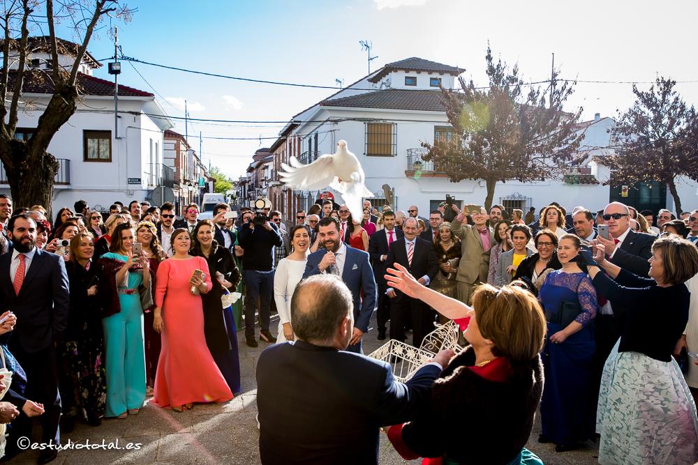 La boda de David y Patricia en La Campana, Boadilla del Monte